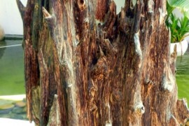 About Agarwood
